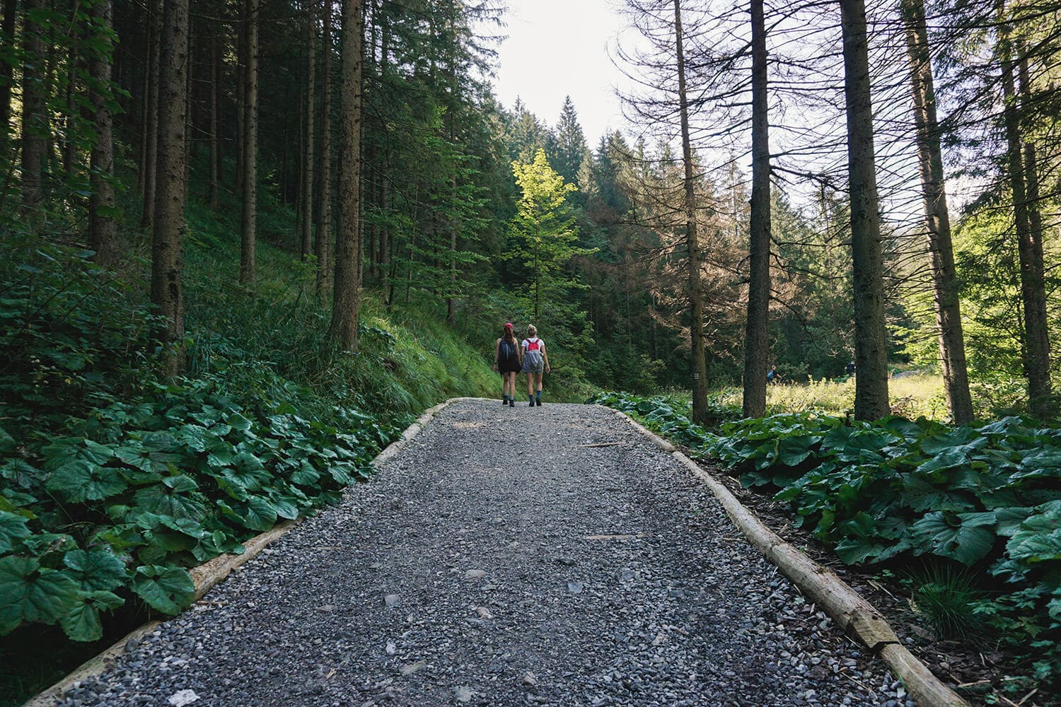 hiking trail in poland mountains